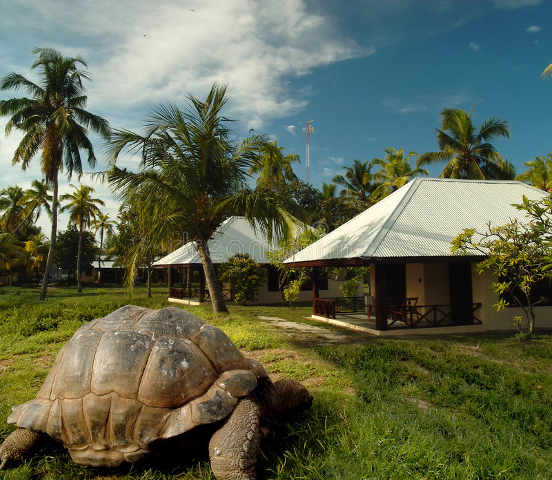 Download World's Oldest Tortoise On Treasure Island. Royalty Free Stock Photos - Image: 16065398