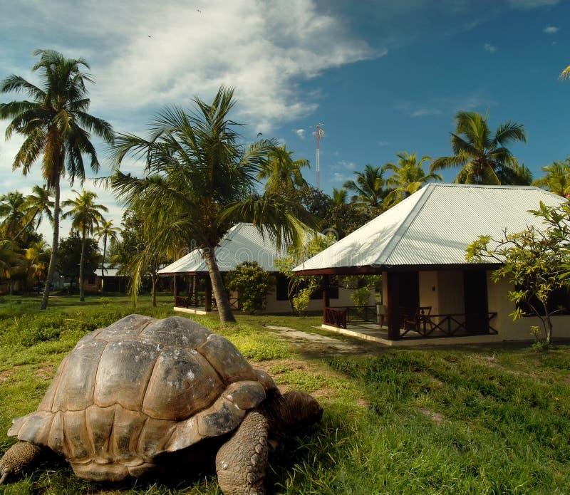 World's oldest tortoise on treasure island. Esmeralda, the world's oldest tortoise as the keeper of pirates treasure. Bird island. The legends of Seychelles royalty free stock photos