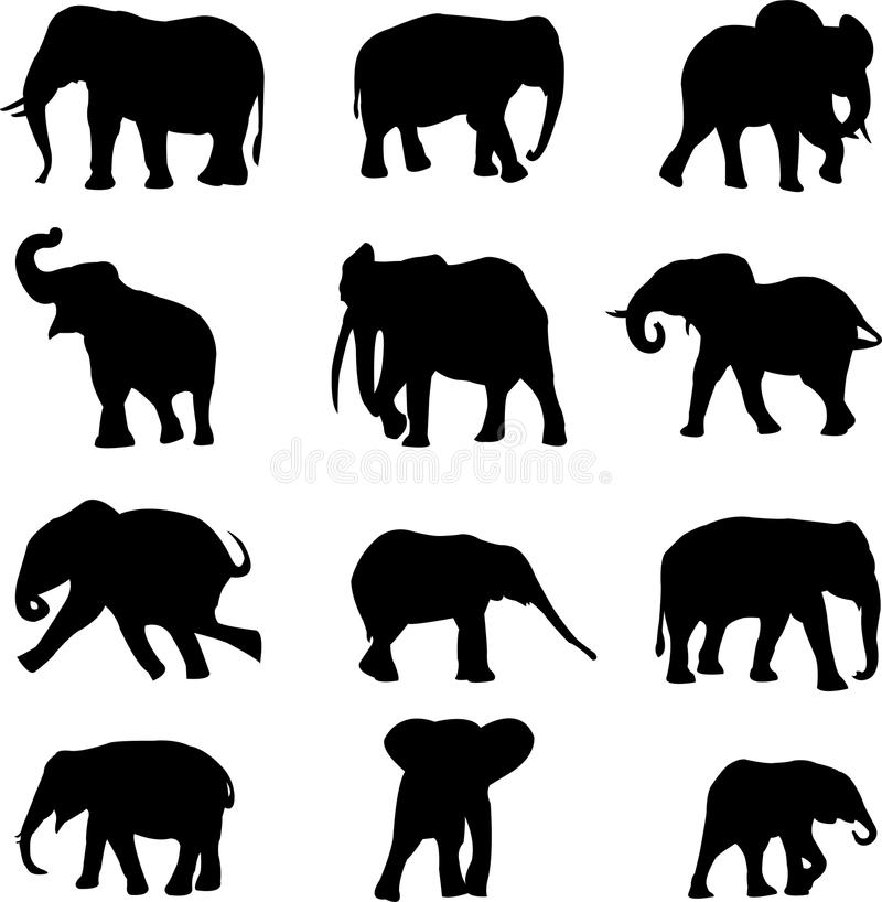 The world's three kinds of elephants stock illustration