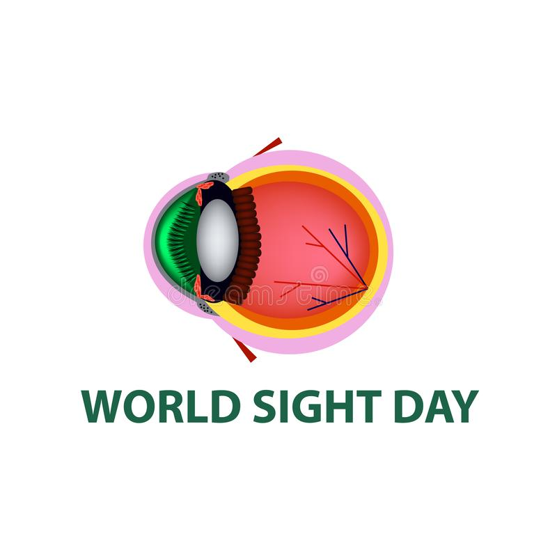 World Sight Day. October 11. Eye anatomical structure. Vector illustration on isolated background.  stock illustration