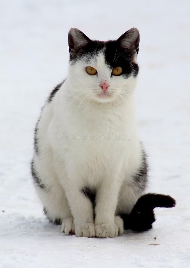 A cat on a street walk royalty free stock photos