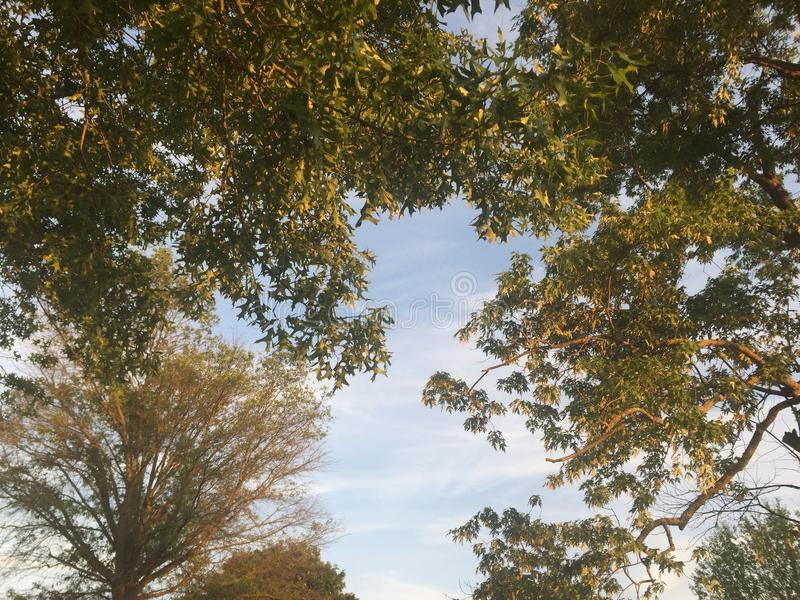World of trees. Trees with allot of leaves with blue sky royalty free stock images