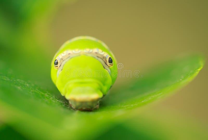 worm stock fotografie
