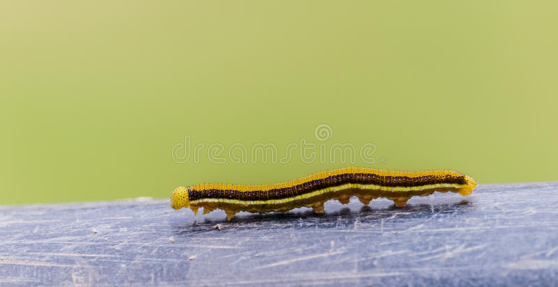 Worm stock images