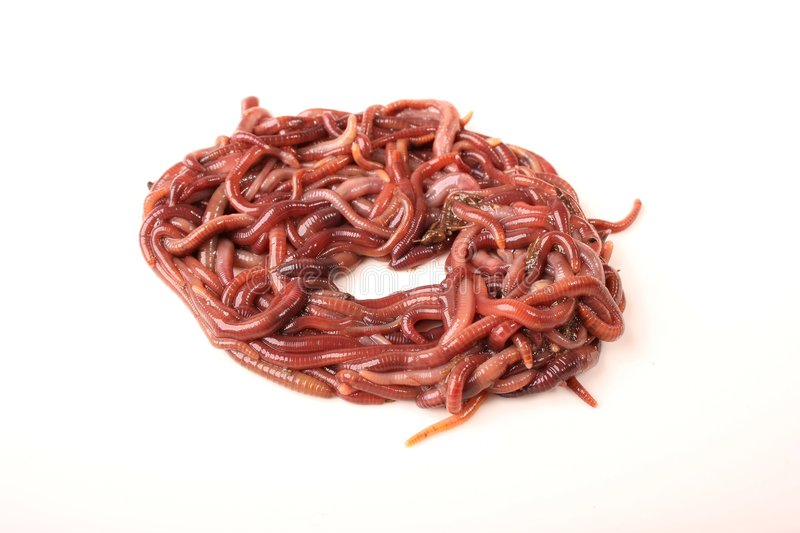 Worm Donut stock photography