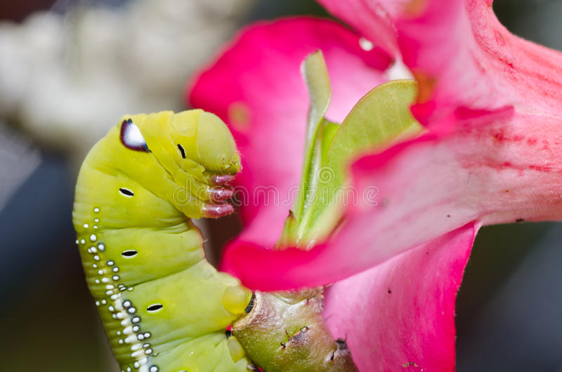 Worm In Green Nature Royalty Free Stock Photography