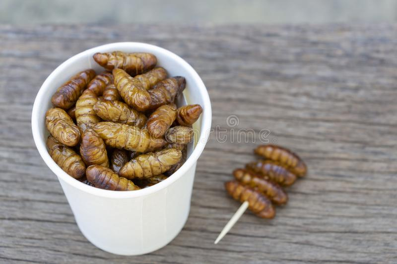 Worm insects or Chrysalis Silkworm in white paper cup on wood table. The concept of protein food sources from insects. It is a. Good source of protein, vitamin royalty free stock photo