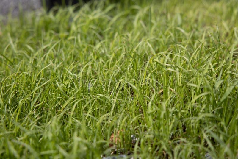 Worm's eye view of Fresh Light green grass. stock photo