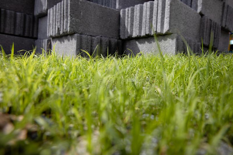 Worm's eye view of Fresh Light green grass. stock image
