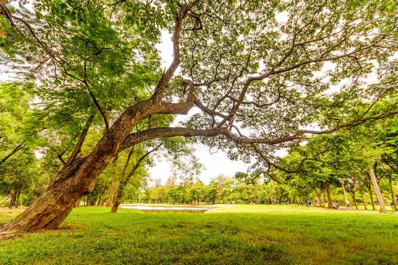Worm's Eyeview of Tall Tree Under a Gray Sky royalty free stock photos