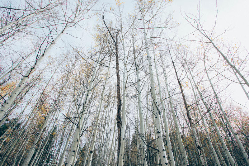 Worm's Eye View Of Bare Trees During Daytime Free Public Domain Cc0 Image