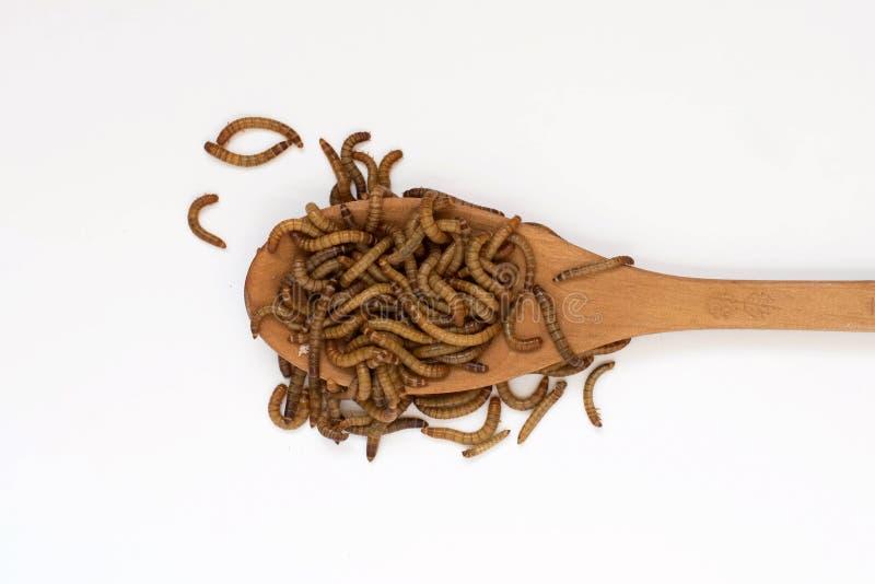 Wormen, Maaltijdwormen op houten lepel op witte achtergrond larven van molitor van kevertenebrio royalty-vrije stock afbeeldingen