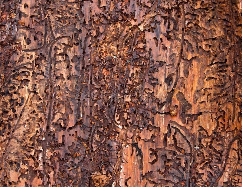 Wormhole Wood Background royalty free stock images
