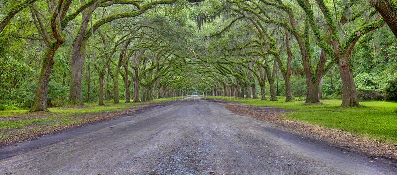 Wormsloe种植园全景,大草原,乔治亚 免版税库存图片