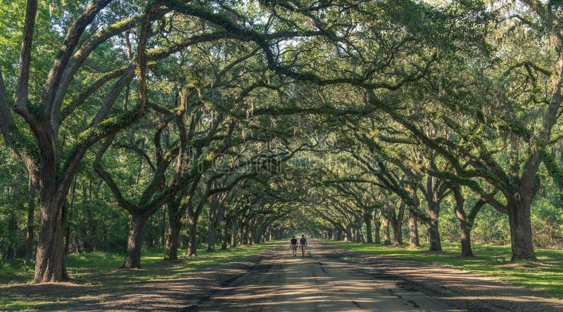 Wormsloe Plantation in Savannah royalty free stock image