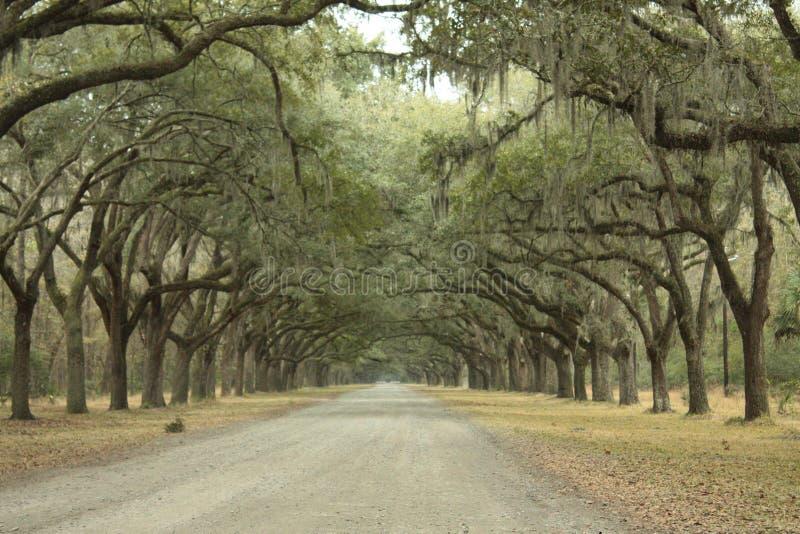 Wormslow plantation stock photography