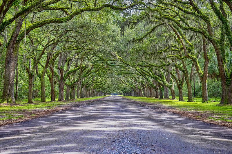 Wormsloe Plantation Historic Site Tunnel royalty free stock photo