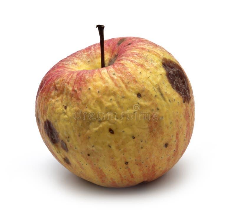 Wormy äpple arkivbilder