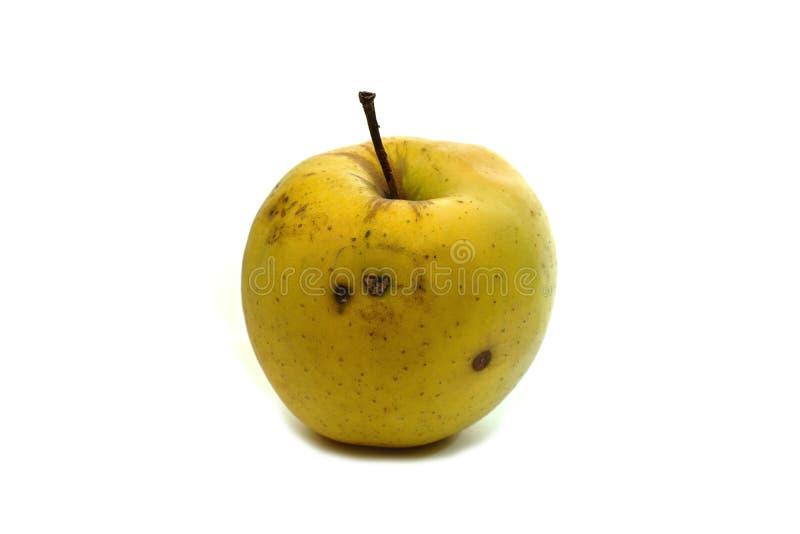 wormy äpple royaltyfri bild