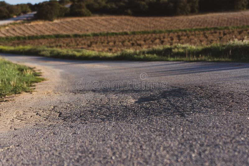 Worn asphalt road among green fields in spring. Spring time stock photos