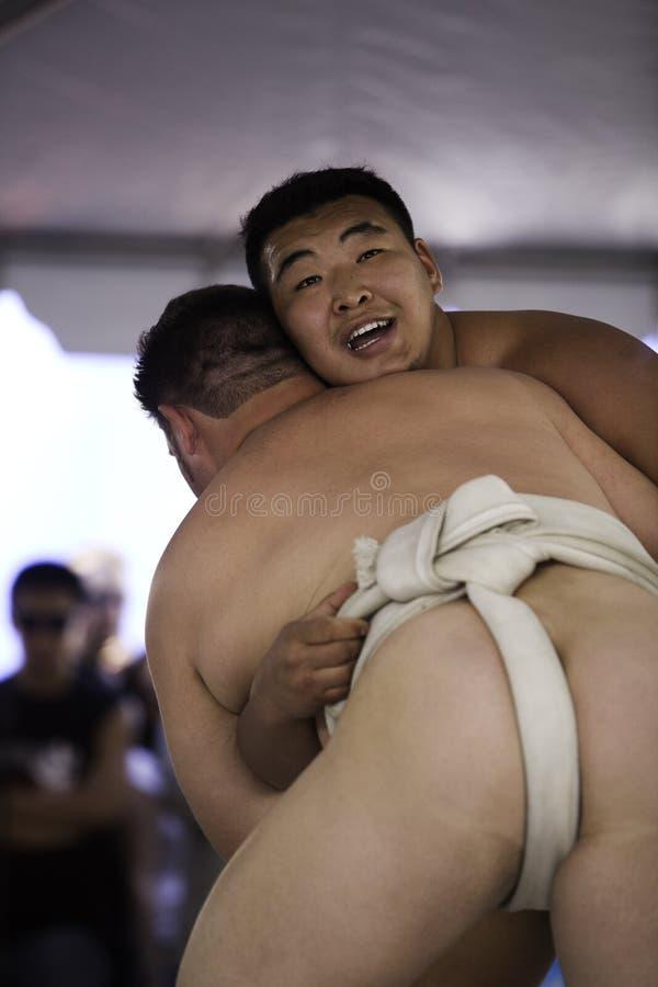 Worstelaars 24 xl van Sumo stock foto