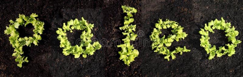 Wort paleo mit Kopfsalat lizenzfreies stockbild