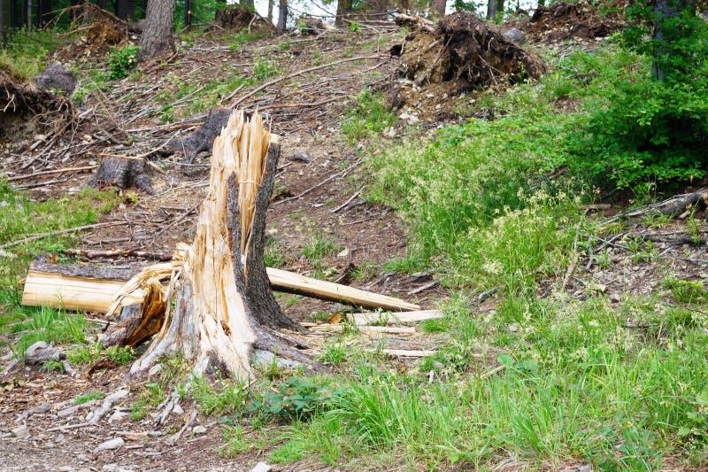 Wortel in het bos, de overblijfselen van een boom door een sterke wind ten val die wordt gebracht die royalty-vrije stock fotografie