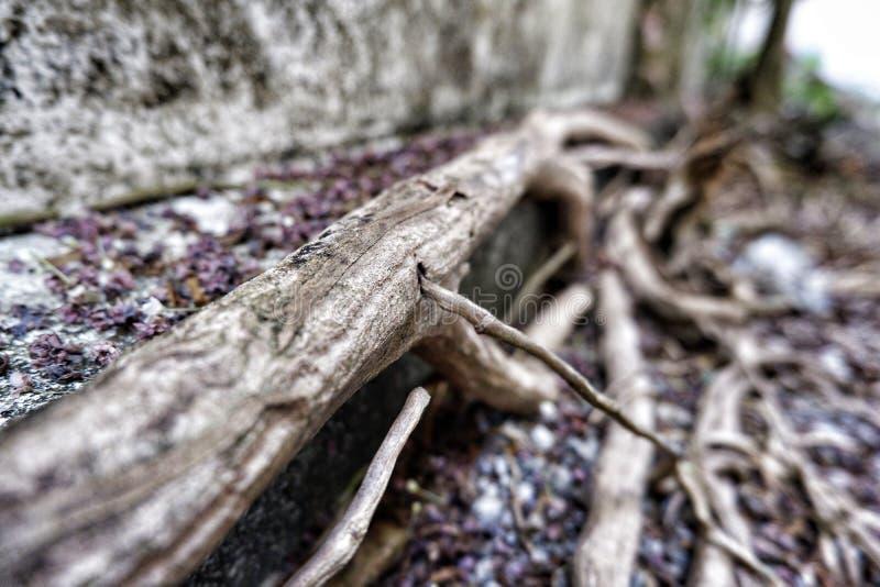 Wortel van boom stock afbeeldingen