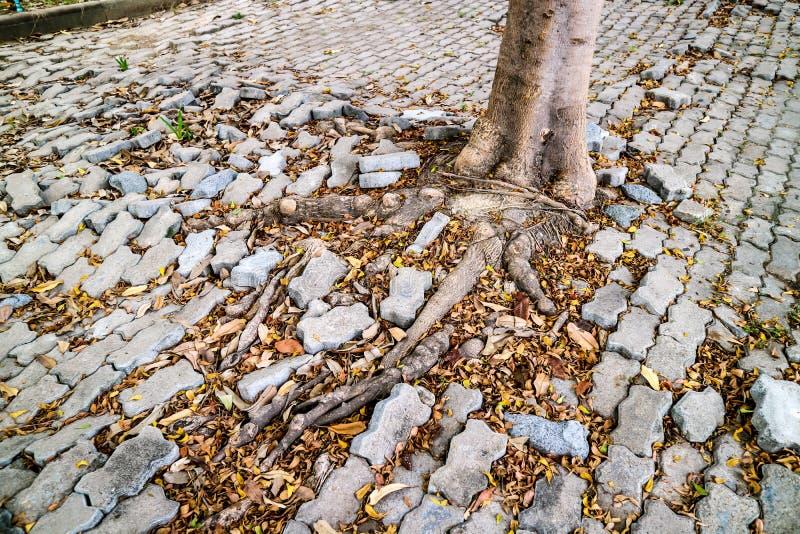 wortel van boom het groeien en het blokgang van de schadebaksteen royalty-vrije stock afbeelding