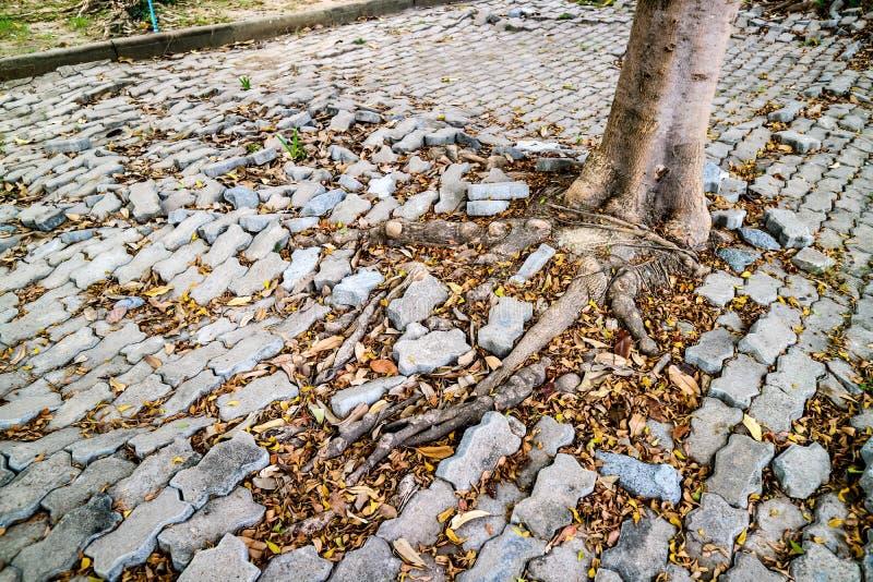 wortel van boom het groeien en het blokgang van de schadebaksteen royalty-vrije stock foto's
