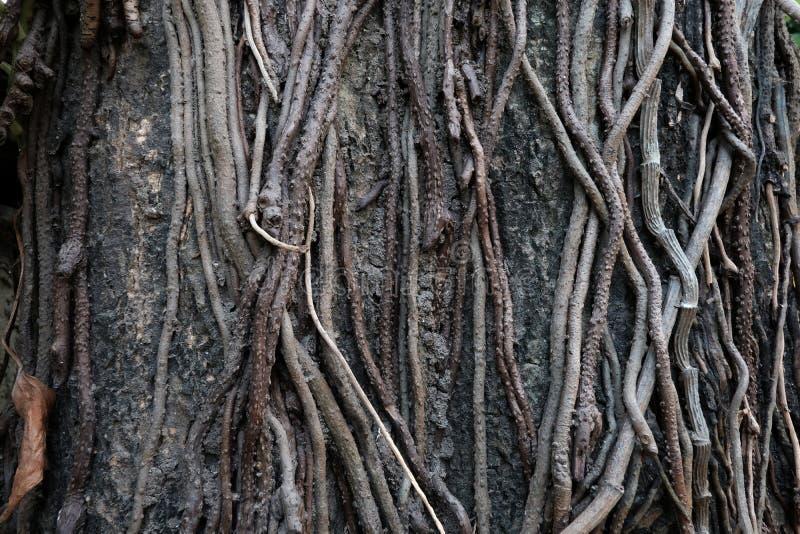 Wortelboom in bos/ingewikkeldheid royalty-vrije stock afbeelding