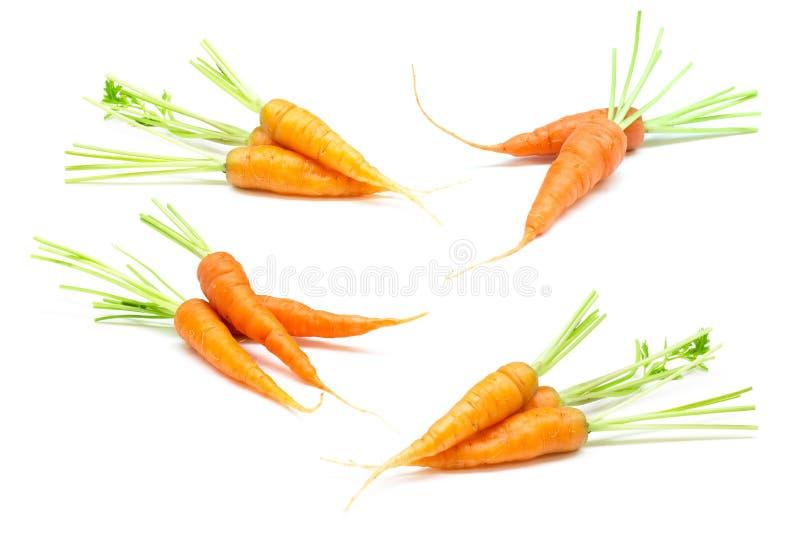 Wortelen, babywortel, verse wortel op witte achtergrond stock afbeelding