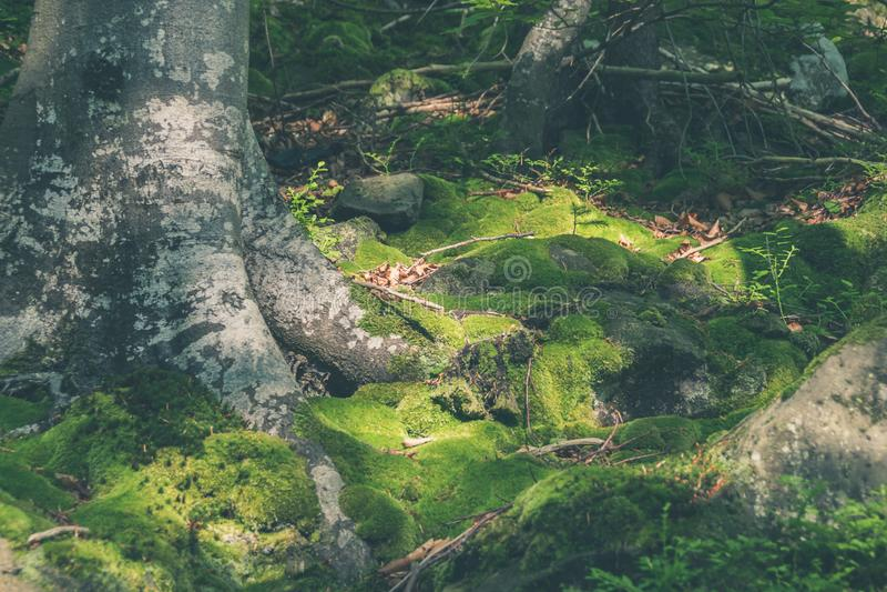 Wortels en mos royalty-vrije stock afbeelding