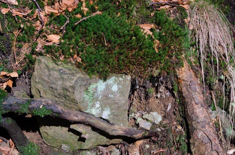 Wortels met rotsen stock afbeelding