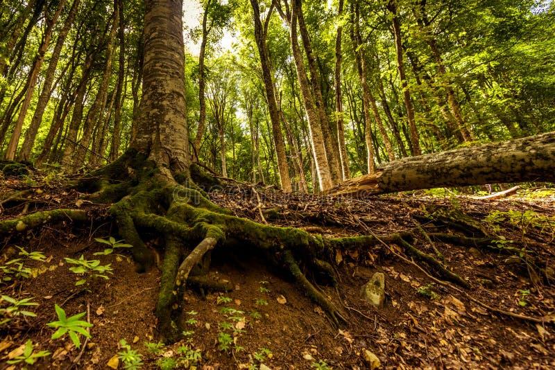 Wortels van boom in bos stock afbeelding