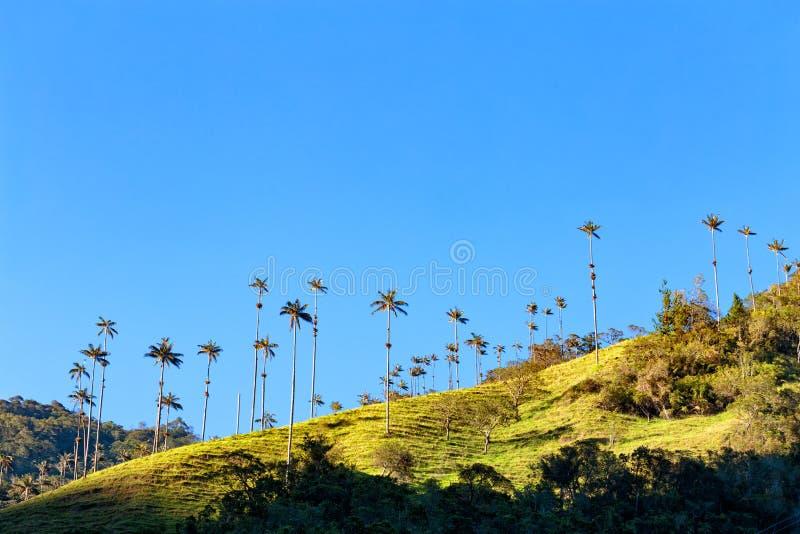 Wosk palmy obrazy royalty free