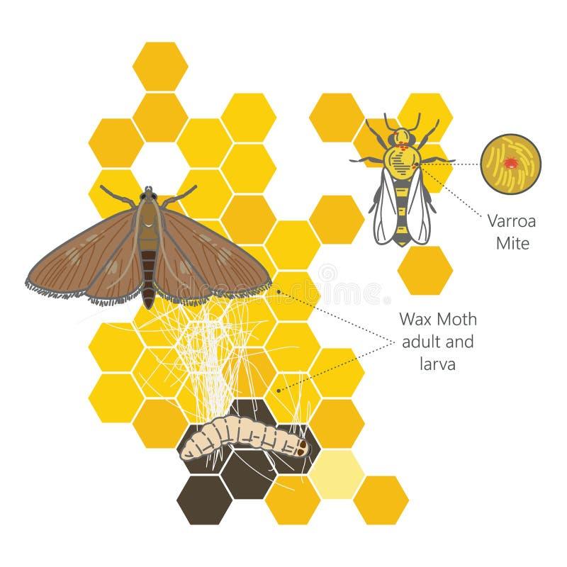 Wosku ćma larwy na infekującej pszczoły gniazdeczka wosku pszczoły Okropnej ramie jedzącej darmozjadami Varroa lądzieniec royalty ilustracja