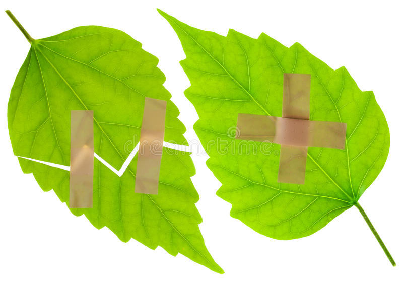 Wounded Green Leaves With A Plaster Royalty Free Stock Photo