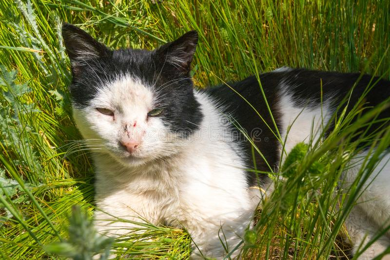 Wounded street stray cat in grass stock images