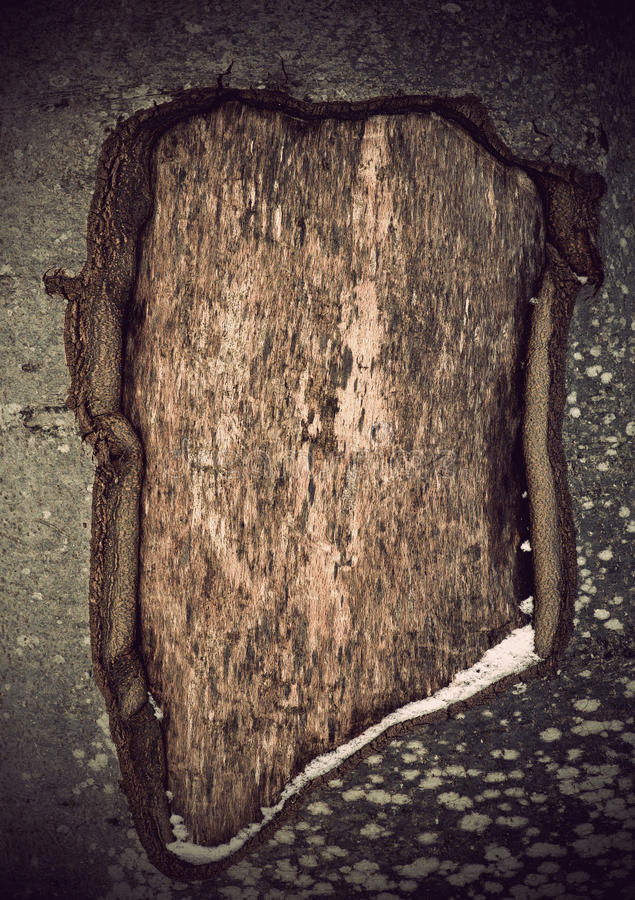 Download Wounded Tree Royalty Free Stock Photo - Image: 23194615