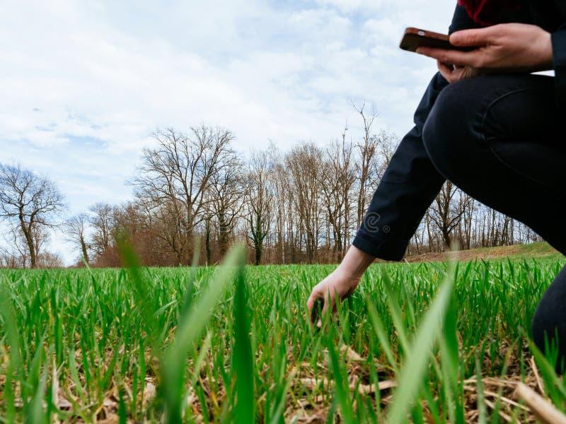 Woungs-Landwirtschafts-Frauenbiologe, der die Ernte kontrolliert stockbilder