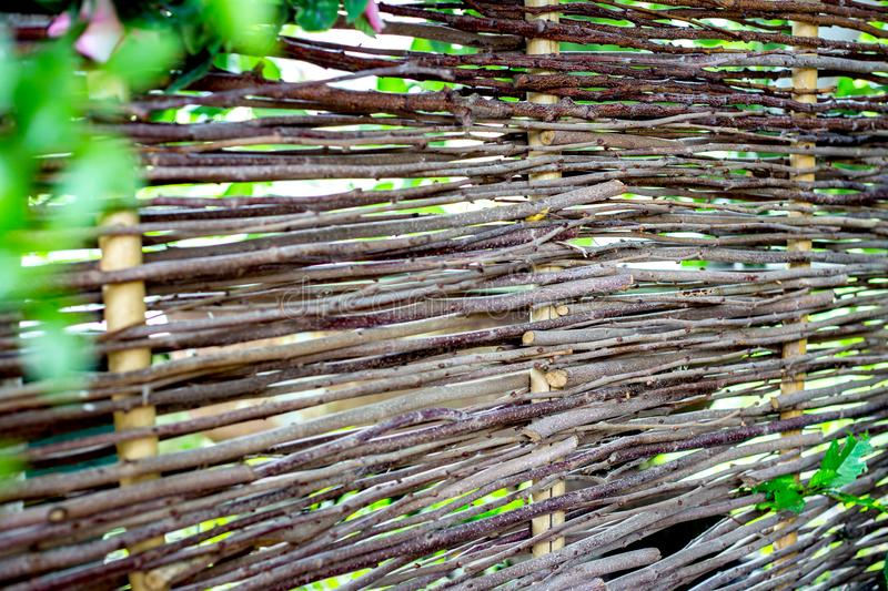 Woven willow fence, twined bindweed against a background of green grass stock photos