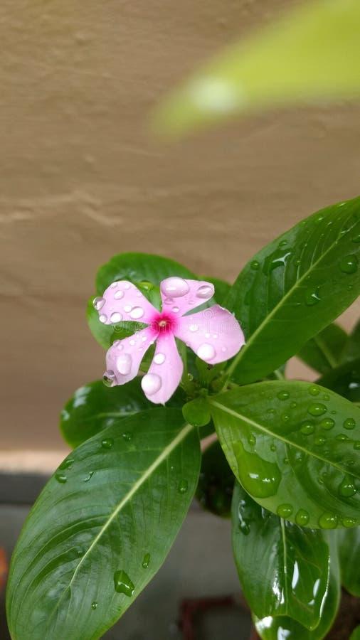 Wow στις βροχερές ημέρες στοκ εικόνα με δικαίωμα ελεύθερης χρήσης