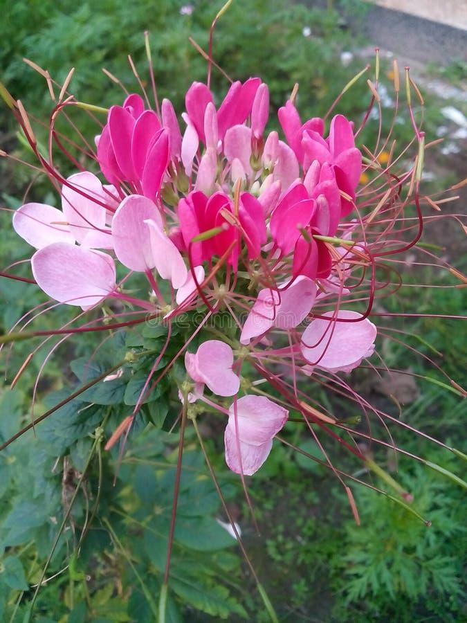 Wowsome-Blume lizenzfreies stockbild