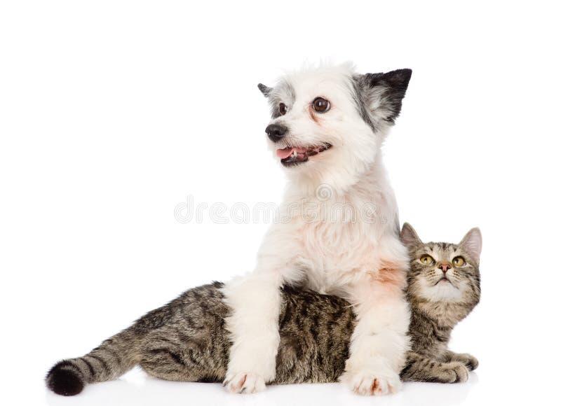 wpólnie kota pies pojedynczy białe tło obrazy royalty free
