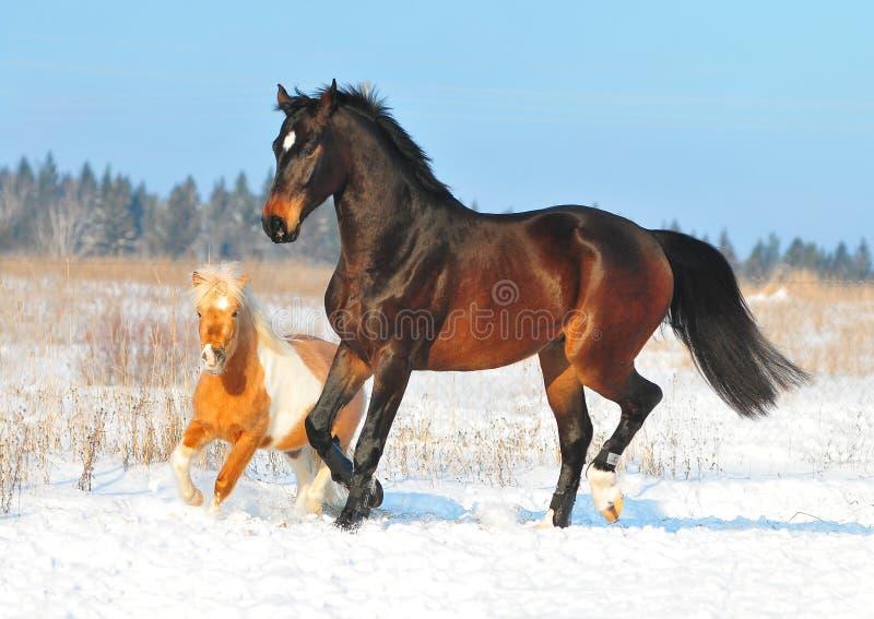 wpólnie sztuka koński konik zdjęcia royalty free