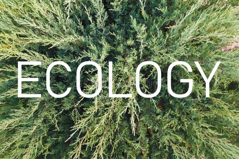 Wpisowa ?ekologia ?na tle ?ywa zielona ro?lina fotografia stock