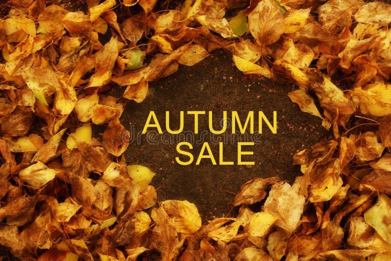 Wpisowa jesieni sprzedaż jesień tło opuszczać kolor żółty B obrazy stock
