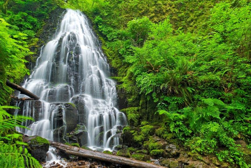 wróżka objętych Oregon zdjęcia stock