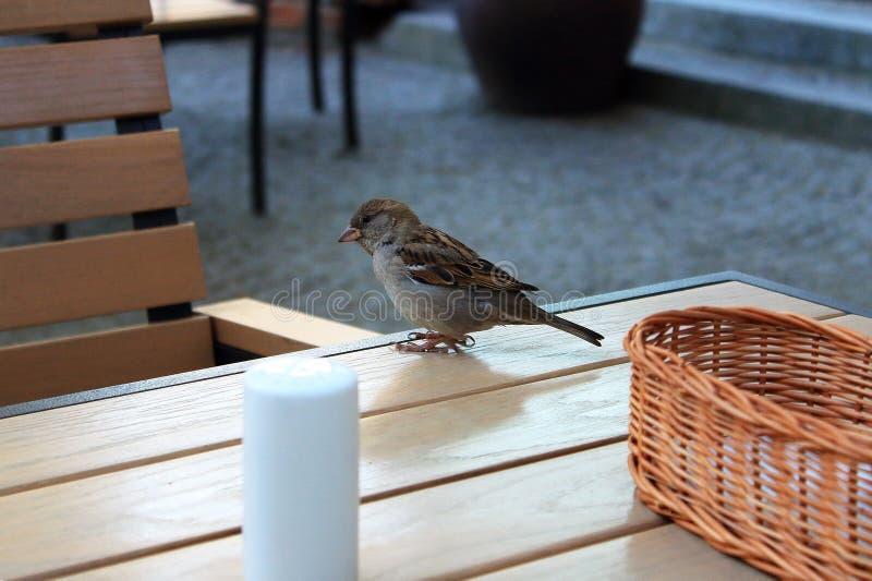 Wróbel na stole w caffe zdjęcie stock